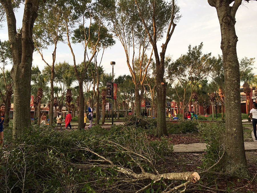 In+preparation+for+hurricane+season%2C+the+trees+in+the+courtyard+were+trimmed+and+debris+was+scattered+along+the+path+to+the+theme+day+judging+during+homecoming+week.++The+homecoming+dance+and+Powder+Puff+game+were+rescheduled+as+a+result+of+Hurricane+Irma.