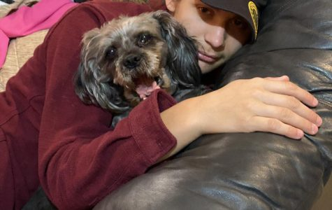 Staff Pick: Reducing Anxiety by Bonding with pets